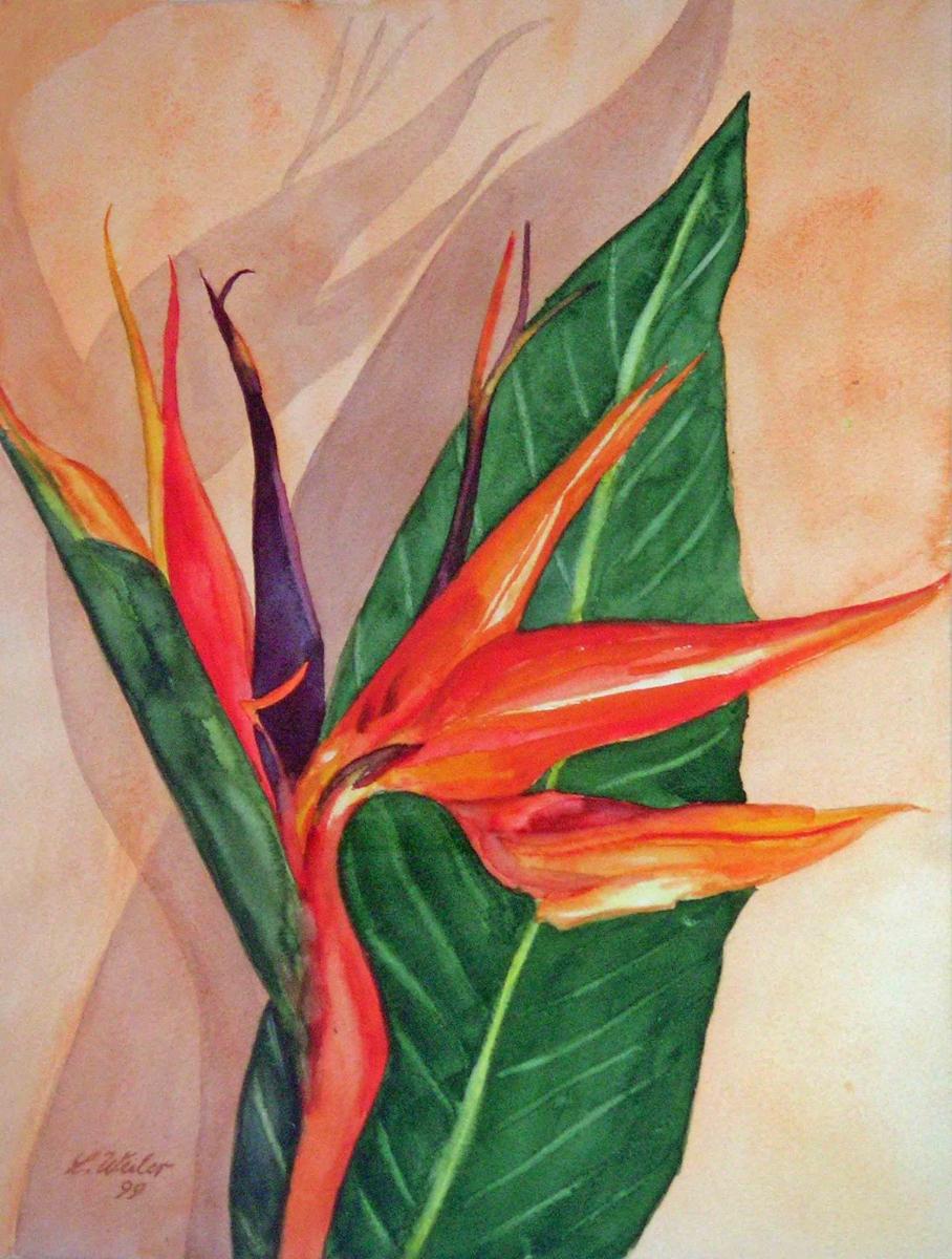 P16, Strelizie, 1999, Aquarell, 50x40 m.R., © Lore Weiler