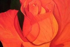 P7, Rose, 2005, A-L, 50x40, © Lore Weiler